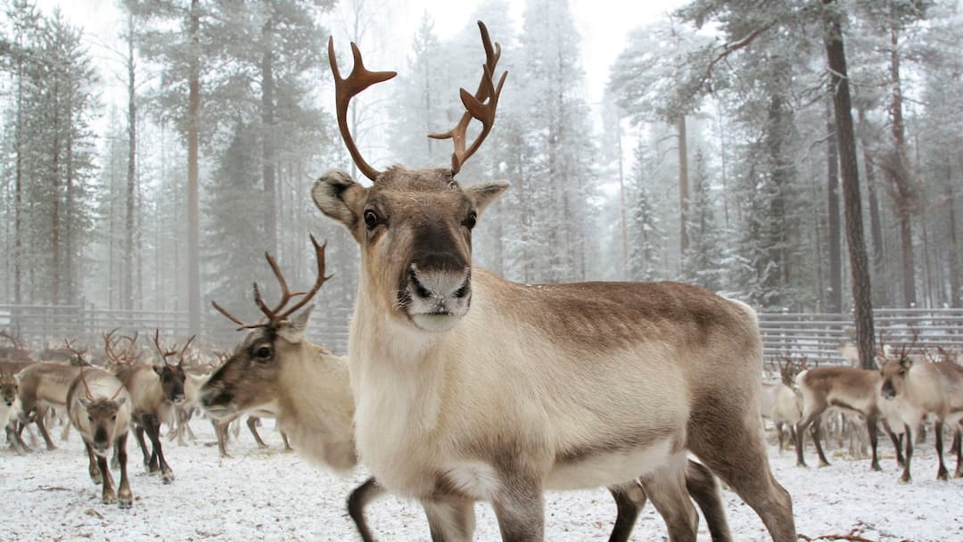 Santas Reindeer Names And Where To Find Them I Tui