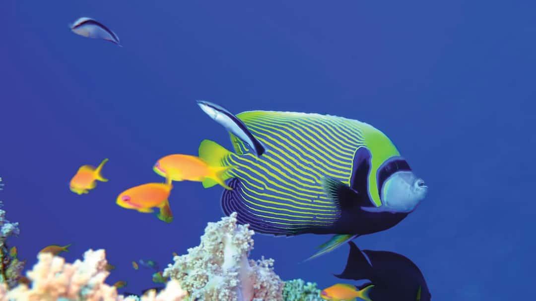 Visit Aquarium Roquetas First Choice