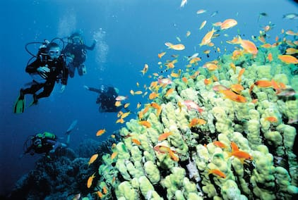 divers on coral reef