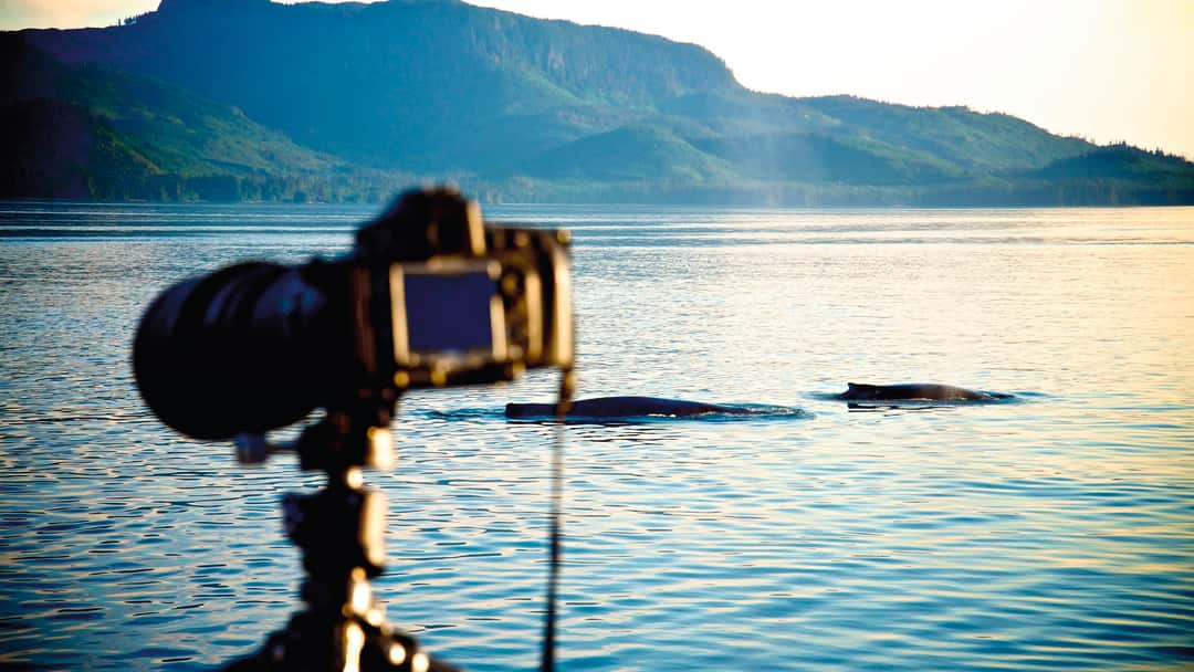 Photographing whales in the wild